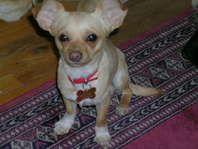 Ksl Classifieds Pets Dogs