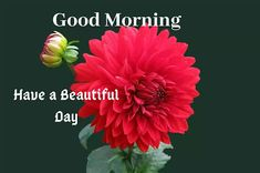 A collection of Beautiful Good Morning Images, beautiful good morning pictures, whatsapp good morning images and quotes. Sweet Good Morning Images, Morning Images In Hindi, Good Morning Picture, Morning Pictures, Have A Beautiful Day, Beautiful Flowers, School Book Covers, Friends Image, Happy Birthday Images