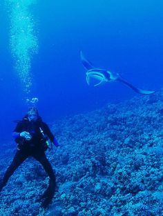 If you're looking for the best dive destinations for manta rays, look no further! We've got 3 of the most beloved places for these gentle giants right here. http://aquaviews.net/scuba-dive-destinations/dive-destinations-for-manta-rays/