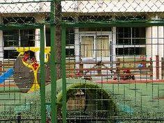 L'école, cabane à lapins.(Hé oui...)