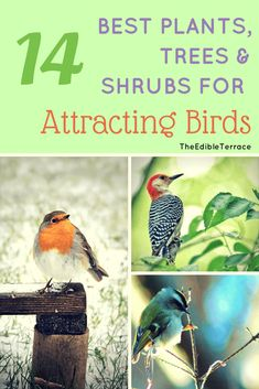 Do you want to attract birds to your yard naturally? Here are the top 14 plants, shrubs and trees that will attract them to your yard or garden without you having to worry about keeping up with bird seed and food. #wildbirds