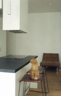 kitchen | cat | apartment | interior | design