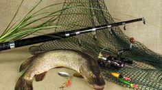 Fishing, Fish, predatory fish, Pike, Spinning, Floats, Reel