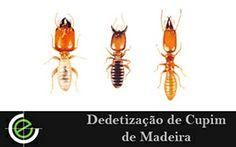 A melhor Dedetização de Cupim de Madeira de São Paulo esta aqui na Exterminex, venha conferir!