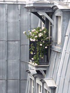 Pro Paris — lilyadoreparis:  Toits de Paris. Paris rooftops....