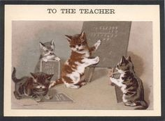 kitten math scholars- must show to mathematician little brother...