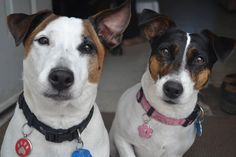 Casper & Kiwi - This pic won them -  Lucky Pet's November Pets of the Month & a free pet tag certificate.