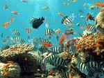 Eläimistö meren