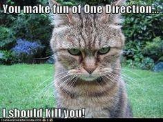 The cat has spoken