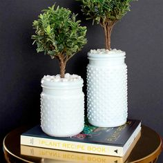 Arrange a couple indoor, living topiaries and plant them in milk glass vases!  Click through for the how-to.