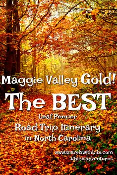 Fall Leaf Color Road Trip In Maggie Valley, North Carolina Usa Travel Guide, Budget Travel, Travel Usa, Travel Ideas, Travel Tips, Maggie Valley North Carolina, Maggie Valley Nc, Places To Travel, Places To Visit
