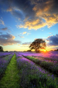 I want to walk through a flower field with flowers as far as the eye can see.