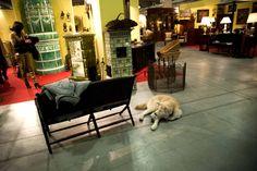#Mercanteifiera loves #dogs