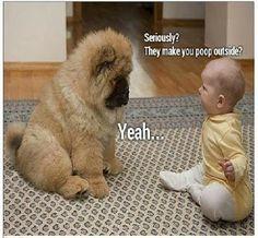 Funny! yep they make me poo outside.