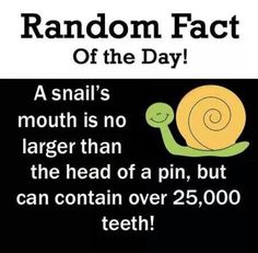 Submitted by a fellow colleague (you know who you are!) - a fun fact about snail's teeth!