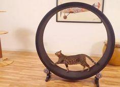 Roda de gatos