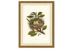 Nest Print II, Honey-Toned Frame on OneKingsLane.com