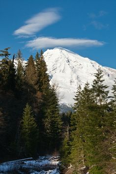 Mount Rainier Viewed from Kurtz Creek by Lee Rentz**