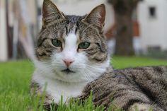 Katzen graben ihren Kot ein, aber wenn Kater auf Brautschau sind, markieren sie so ihr Revier. Es gibt jedoch einige bewährte Hausmittel dagegen!