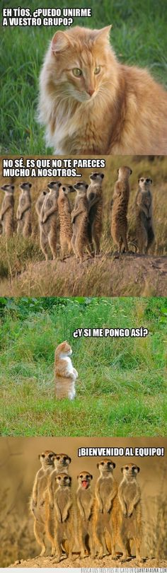 El nuevo miembro de la familia suricata