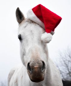 Merry Merry Christmas from my barn family to yours!