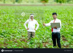 agronomist with farmer at cotton field Photo Agriculture Photos, Cotton Fields, Icon Pack, Model Release, Photo Illustration, Free Design, Farmer, Vector Free, Photoshop
