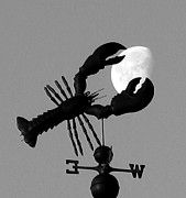 Lobster catches the moon