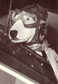 Brian griffin's aviation career brought to and end because he was busted for flying under the influence