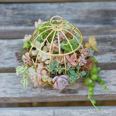 Mini succulents in tiny birdcage