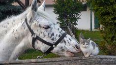 (96) Horses & Cats