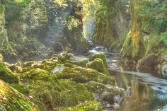 The Fairy Glen at Betws-y-Coed is a magical place - a narrow canyon through which the River Conwy runs