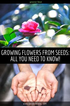 Growing flowers from seeds have many advantages. Not only is it easier and cheaper, but once you see the plants growing there is that feeling of pure satisfaction. Also, it's a natural process. All You Need to Know About Growing Flowers from Seeds