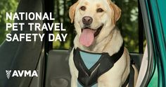Happy National Pet Travel Safety Day! Learn about the dangers of unsecured pets in vehicles and how to make vehicle travel safer for both people and the pets they love.
