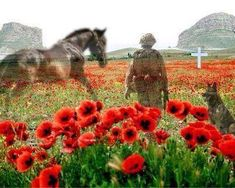 Armistice Day - the eleventh hour of the eleventh day of the eleventh month of Lest we forget. Remembering all the horses and dogs who have given their lives in times of war. Remembrance Day Images, Remembrance Day Poppy, Armistice Day, Flanders Field, Horses And Dogs, War Horses, Horse Horse, Lest We Forget, Don't Forget