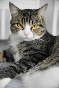 Finnish Seppo the cat saved his family from fire, when the dishwasher caught fire. He meow loudly until the mother came into the kitchen and saw flames coming out of the dishwasher. Father extinguished the flames and called the firemen still check everything was ok. Well done Hero Seppo the cat!