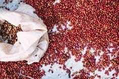 #burundicoffee #coffeeforchristmas #burundi #longmilescoffeeproject