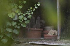 Oxfordshire based garden and lifestyle photographer - Eva Nemeth - Journal