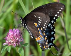 3366-butterfly