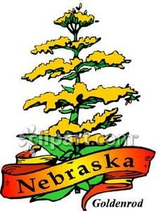 The Nebraska Goldenrod State Flower Royalty Free Clipart Picture