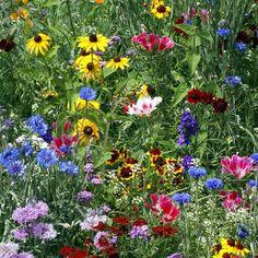 Original Wildflower Mix Seeds