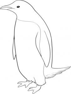 """Look, its how to draw a real penguin! Yay, we're going to go on a penguin drawing spree! Today I will be showing you guys """"how to draw a pengu Bird Drawings, Easy Drawings, Animal Drawings, Drawing Sketches, Pencil Drawings, Penguin Sketch, Penguin Art, Penguin Drawing Easy, Pinguin Drawing"""