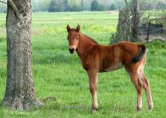 Baby Horse Pictures Tag archives: baby horse