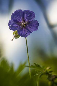 Macro Flower. WasserfarbenFARBFOTOGRAFIELandschaftBlumen