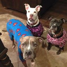 Dog pajama large size only digital download SEWING pattern | Etsy