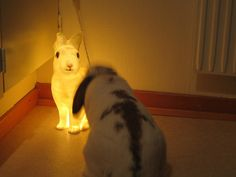 Felix and the bunny lamp #bunnyandfriend