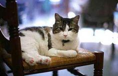 UM Gato Especial..Oscar    Oscar, o gato capaz de prever a morte  Animal que vive em clínica para idosos parece ter a habilidade de pressentir quais pacientes estão prestes a falecer.