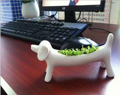 Glovion Miniature Dog Aerobic Desktop Potted Planting Bonsai Oxygen Potted Plant