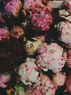 Peonies // Valentine's Day
