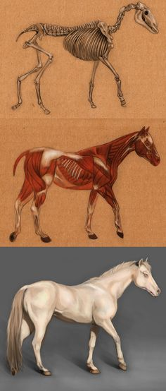 Horse Anatomy by aichan666.deviantart.com on @deviantART