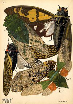Canada Goose parka online cheap - 1000+ images about Art of Nature on Pinterest | John James Audubon ...